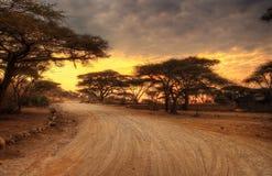 Animais selvagens do parque nacional de Serengeti fotos de stock royalty free