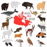 Animais selvagens dos ícones lisos da cor de Canadá ajustados ilustração royalty free