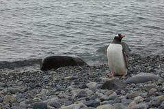 Animais selvagens e pinguins da Antártica fotos de stock