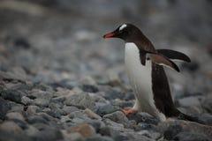 Animais selvagens e pinguins da Antártica fotografia de stock royalty free