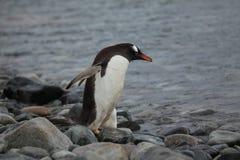 Animais selvagens e pinguins da Antártica imagem de stock royalty free