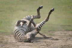 Animais selvagens em Tanzânia foto de stock royalty free