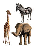 Animais selvagens mim Foto de Stock Royalty Free