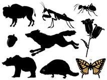 Animais selvagens na floresta ilustração royalty free