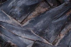 Animais selvagens naturais da opinião de árvore do curso do verão da casca da garra, close up de madeira Fotografia de Stock Royalty Free
