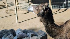 Animais selvagens no jardim zoológico ilustração do vetor