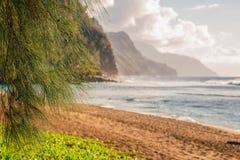 Animais selvagens que descansam entre povos na ilha do paraíso do PF da praia imagem de stock royalty free