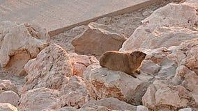Animais selvagens, rochas, animal, mar, montanha fotografia de stock royalty free