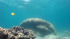 Animais selvagens submarinos bonitos, habitat marinhos video estoque