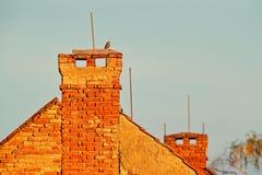 Animais selvagens urbanos, coruja na chaminé do telhado Coruja pequena, noctua do Athene, pássaro no habitat da natureza, fundo c fotografia de stock