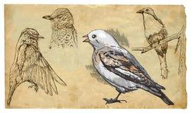 Animais, tema: AVES CANORAS ilustração do vetor