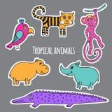 Animais tropicais ajustados Foto de Stock Royalty Free
