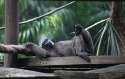 Animal. A closeup shot of monkey stock images