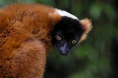Animal Imagen de archivo