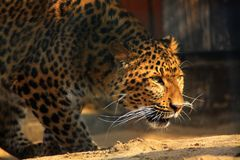 Animal Royalty Free Stock Images