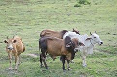 Animal Fotos de Stock Royalty Free