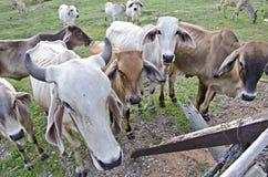 Animal Fotos de Stock