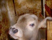 Animal Image libre de droits