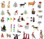 animal Imagens de Stock Royalty Free