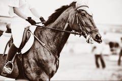 Animal Royalty Free Stock Photography