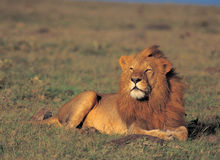 Animal Royalty Free Stock Photo
