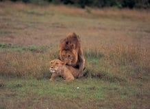Animal Royalty Free Stock Photos