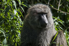 Animal photographie stock