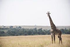 Animal fotos de archivo libres de regalías