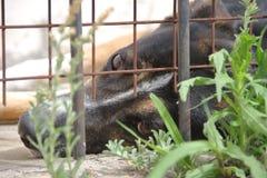 Animal abuse royalty free stock photography