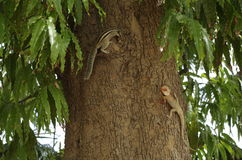 Animal in action. On tree. Opposite to each other Stock Photos