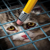 Animal Adoption. Concept and rights as a kitten behind a cage being erased by a yellow pencil eraser as a hope metaphor for adopting pets from a shelter giving Stock Photography