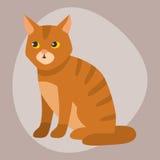 Animal adorable pelucheux de bande dessinée de portrait mignon d'animal familier de race de chat le jeune et le joli amusement jo Images libres de droits