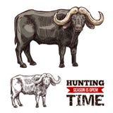 Animal africain de mammifère de buffle de cap ou de boeuf de désert illustration libre de droits