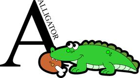 Animal Alphabet Alligator. Illustration of alphabet letter A with a cute happy alligator with meat food isolated on white background Royalty Free Stock Image