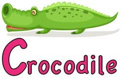Animal alphabet C for crocodile Royalty Free Stock Photos