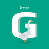 Animal Alphabet Concept in Flat Design. Animal alphabet vector concept. Flat style. Zoo ABC with domestic bird. Fatty goose standing on green background, letter Royalty Free Stock Image