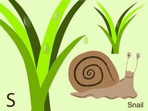 Animal alphabet flash card, S for snail Royalty Free Stock Images
