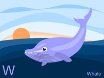 Animal alphabet flash card, W for whale Stock Image