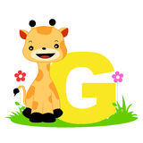 Animal alphabet G. Illustration of alphabet letter G with a cute little giraffe on grass with beautiful flowers isolated on white background. G is for Giraffe royalty free illustration