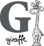 Animal alphabet G (giraffe). Animal alphabet - letter G (giraffe Stock Photo
