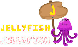 Animal alphabet j with jellyfish. Illustration of isolated animal alphabet j with jellyfish Royalty Free Illustration