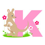 Animal alphabet K. Illustration of alphabet letter K with a cute little  Kangaroo with a baby isolated on white background. K is for Kangaroo Royalty Free Stock Images