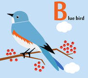 Animal alphabet for the kids: B for the Blue bird Stock Images