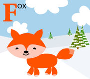 Animal alphabet for the kids: F for the Fox Royalty Free Stock Photo