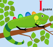 Animal alphabet for the kids: I for the Iguana Royalty Free Stock Images