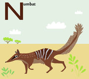 Animal alphabet for the kids: N for the Numbat Stock Photography