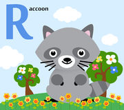 Animal alphabet for the kids: R for the Raccoon. Illustration Stock Photo