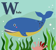 Animal alphabet for the kids: W for the Whale Stock Image