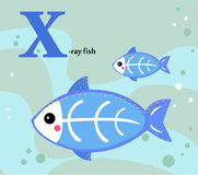 Animal alphabet for the kids: X for the X-ray fish Stock Photography