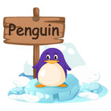 Animal alphabet letter P for penguin Stock Photography